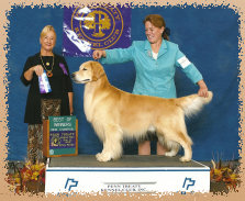 gold_love_goldens_website007001.jpg