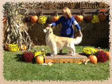 gold_love_goldens_website007002.jpg