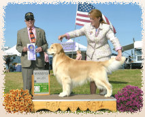 gold_love_goldens_website007003.jpg