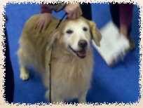 gold_love_goldens_website007004.jpg