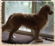 gold_love_goldens_website008001.jpg